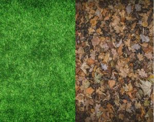 Greens and Browns of Compost