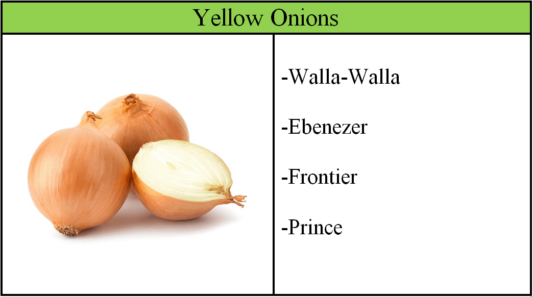 yellow onion varieties