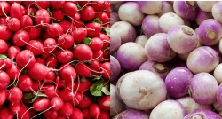 Turnips vs Radishes